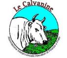 Calvaninebuono